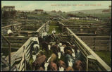 Among the cattle pens, stock yards, South Omaha, Neb.