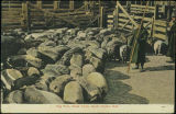 Hog pens, stock yards, South Omaha, Neb.